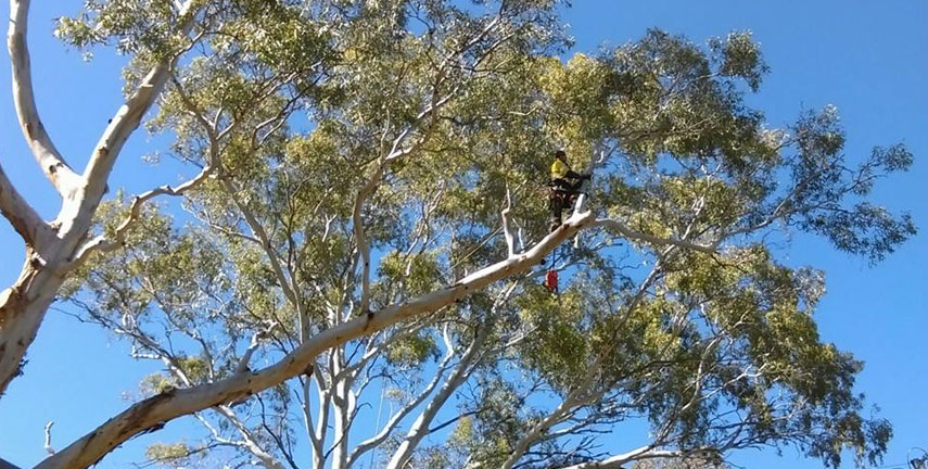 Stump Grinding Reynella, Tree Services Happy Valley, Tree Pruning Woodcroft