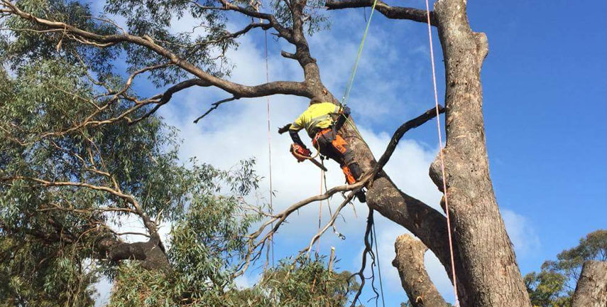Tree Services Happy Valley, Tree Removal Morphett Vale, Tree Pruning Woodcroft